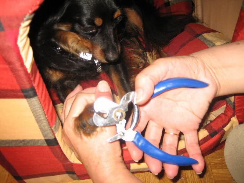 Los cortauñas para perros
