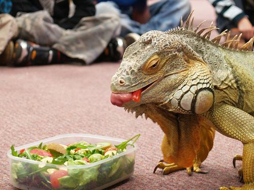 La comida para reptiles