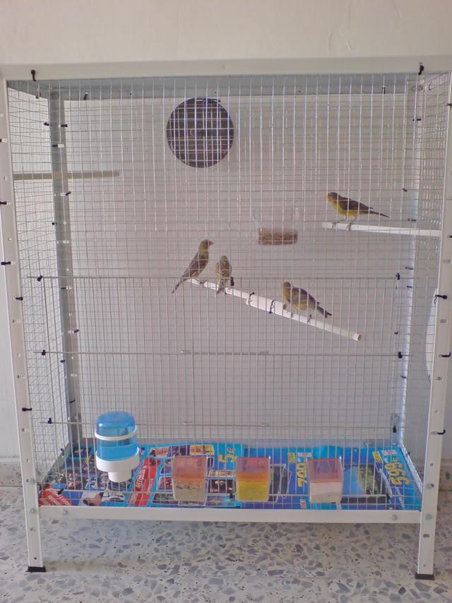 Jaulas para pájaros