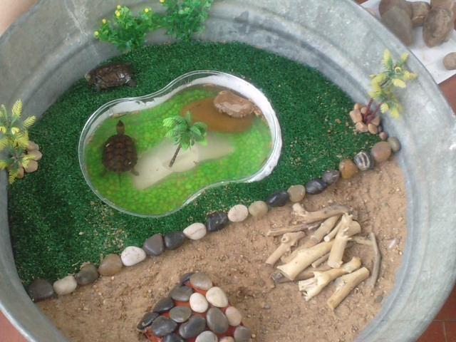 Decoración para tortugas